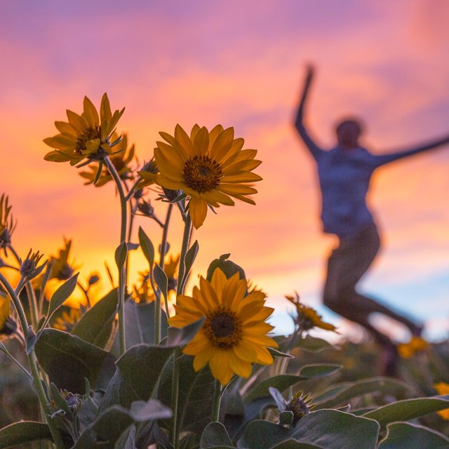 A person jumps for joy in a field of flowers