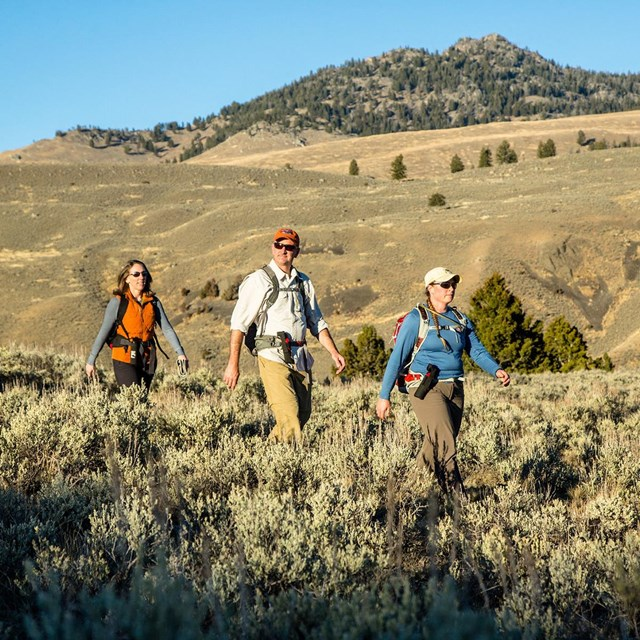 Three hikers walking through a sagebrush field