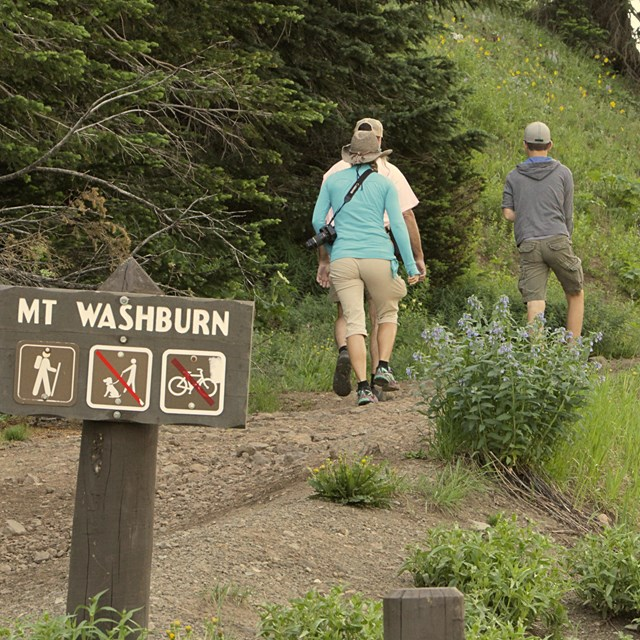 People starting walking uphill on a trail signed Mount Washburn
