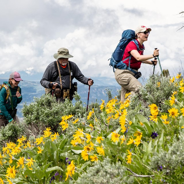 People hiking through a meadow of yellow flowers.