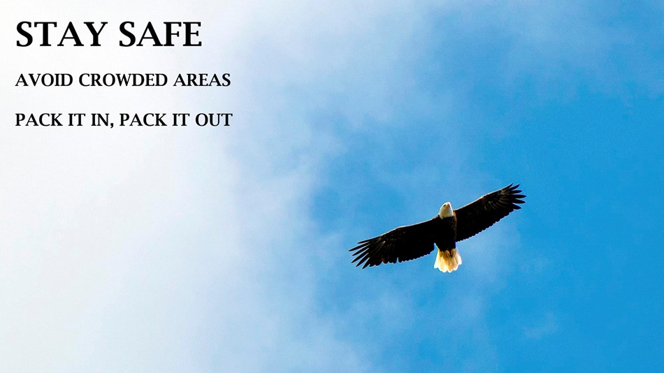 Eagle flying in blue sky  with words