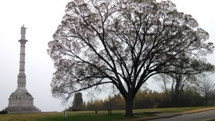 Elm tree in front of Victory Monument in winter.