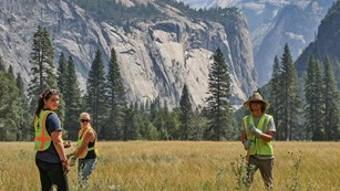 A volunteer team in reflective vests pulls thistles from a sunny meadow in front of cliffs.