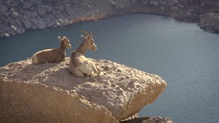 Image from a park video showing two bighorn sheep on a rock ledge