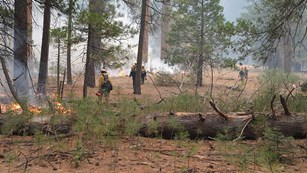 Firefighters igniting a prescribed fire in Yosemite Valley with drop torches