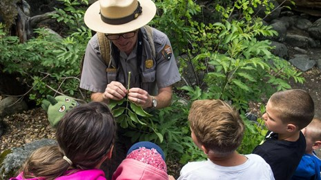 Ranger showing visitors a plant during a program