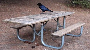 Picnic table with Raven on it.