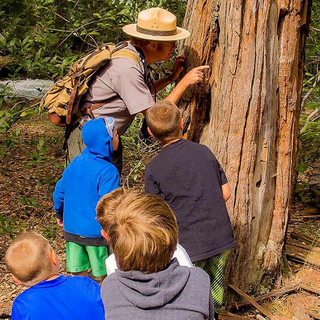 Ranger leading a nature hike and looking at a tree up close with kids in tow
