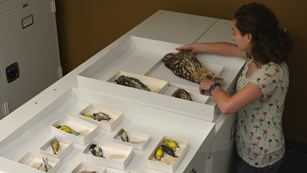 person working with natural history collection