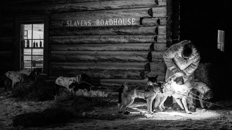A musher tends to his sled dog team in front of Slaven's Roadhouse at night