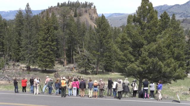 Safety yellowstone national park us national park service publicscrutiny Image collections