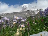 Mount Rainier viewed across glacial moraine and subalpine wildflowers.