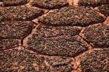 Micro-canyonlands formed by cyanobacterial soil crusts.