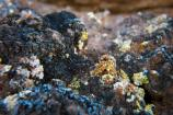 A tiny world of colorful lichens.