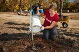 A woman pours water from a white pail onto the roots of a newly-planted tree.