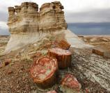 Scenics - Old Highway 180 and Petrified Wood