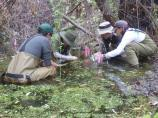 CA Red-legged Frog Translocation