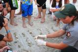 NPS biologist shows visitors hatched sea turtle eggs found during a sea turtle nest excavation