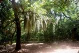 maritime forest on shackleford banks