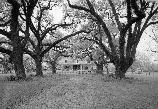 Black and white. The main house of Oakland seen through the trees