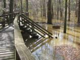 Picture of the Elevated Boardwalk (near trailhead) during a flood event in January 2007.