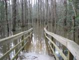 Picture of first bench on Low Boardwalk during January 2007 flood event.