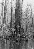 Harry Hampton pictured next to one of the giant Bald cypress trees in Congaree National Park.