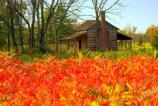 Bright red sumac provide a beautiful foreground for the historic Robert Scruggs House.