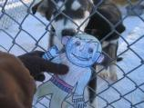 Flat Stanley in the Kennels