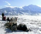 dog team and musher taking a break, with a huge snowy mountain in the distance