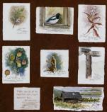 numerous watercolors of birds and plants