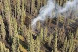 aerial view of spruce trees with a narrow plume of smoke rising from the ground