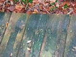 Wooden decking is slippery from moss growth.
