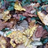 Fallen yellow and brown leaves on the ground