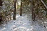 Part of the Thomas Hariot Trail with a fresh layer of snow