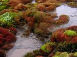 A stream flows through the bright reds and greens of fall tundra.
