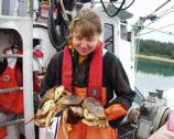 Researcher with dungeness crabs