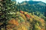 Autumn - Leaf Colors at Newfound Gap