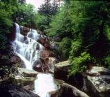Ramsey Cascades, at 100 feet high, is the tallest waterfall in the park.