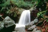 The Trillium Gap Trail runs behind 25' high Grotto Falls.