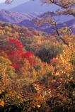 Colorful fall vistas can be found along Newfound Gap Road in October.