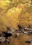 Trees with golden leaves line a quiet stream.