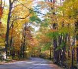 Fall road in the Smokies.