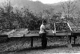 Historic photo of a CCC enrollee cleaning plant seeds for revegetation projects