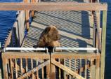 bear standing at wooden gates