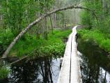 Image of a boardwalk pathway through a swmapy pond with a tree arching over the path