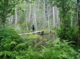 hiking the boardwalk trail over the Beaver Ponds section of Chilkoot Trail by Sandra Snell-Dobert