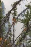 Black spruce crown fire