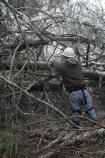 A sawyer works to clear extensive tree damage blocking Green River Ferry Road North in Mammoth Cave National Park after the ice storm.