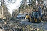 Crews clear downed trees from Green River Ferry Road North after the January 2009 ice storm.